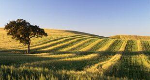 alentejo agricultura