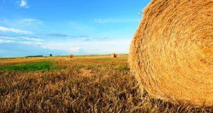 agricultura 06
