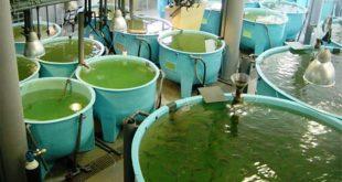 aquacultura 02