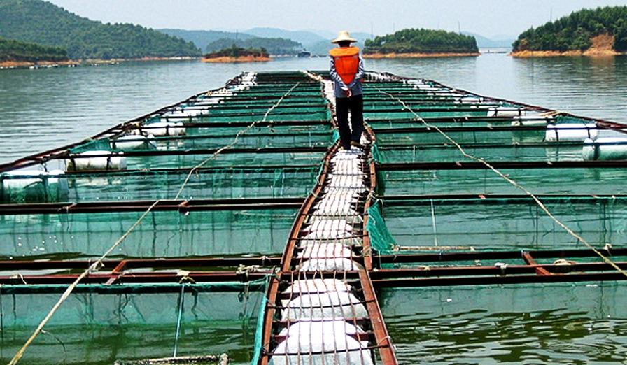 aquacultura 12