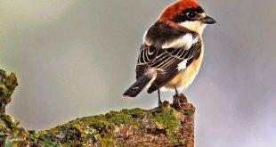 birdwatch 04