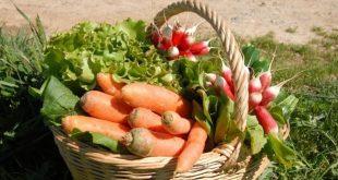 agricultura biológica 01
