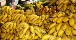banana 01