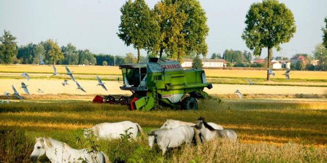 agricultura 0009