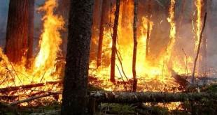 fogos florestais 01