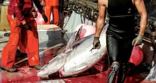 pesca atum 001