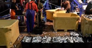 pesca sardinha 004