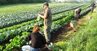 agricultura 009