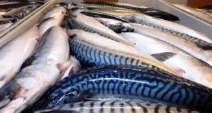 peixes 001
