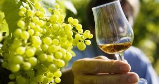 vinho 006
