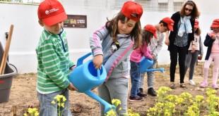 Hortas na Escola, Legumes no Prato