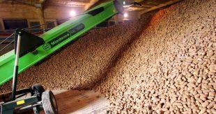 agricultura batata