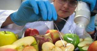 maçã agricultura inovação 01