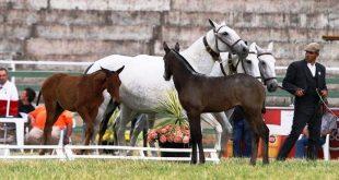 cavalos 03