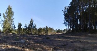 Redes de Defesa da Floresta