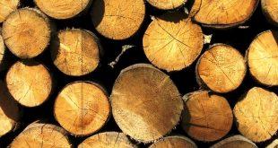 madeira, eucalipto