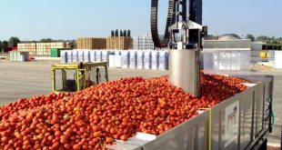 tomate industria 01