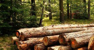 floresta produção