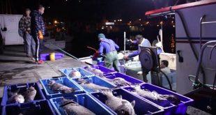 pescado açores lota pesca