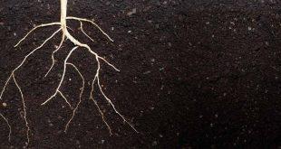 agricultura-raiz-terra