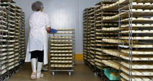 industria-agroindustria-queijos