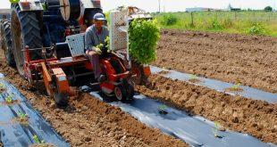silvex-mulch-biodegradavel-agricultura