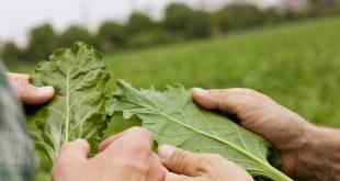 agroinsider-agricultura