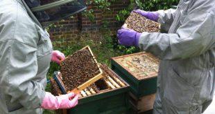 apicultura-mel-apiario-colmeia