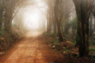 sintra-floresta-emigus