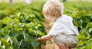 agricultura-crianca-agrobio