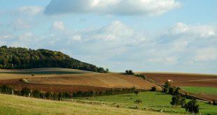 campo agricultura