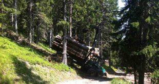 floresta gestao reforma