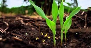 agricultura biologica 03