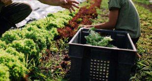 agricultura hortas 03