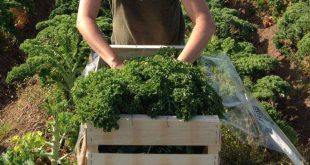 agricultura hortas