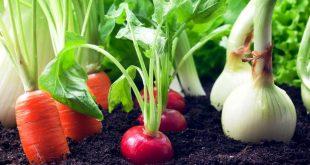 agricultura legumes 07