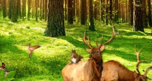 apas_banner floresta