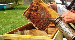 apicultura 05