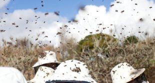 apicultura 07