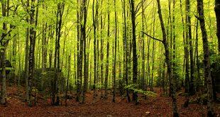 floresta 10