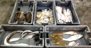 fuga lota cascais peixe pesca