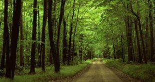 gnr caminhada floresta