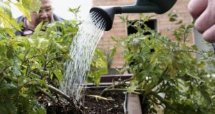 jardinagem agricultura horta