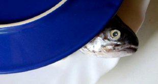 peixe fishchoice
