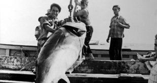 Pesca do atum tradicional