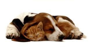 animais estimação