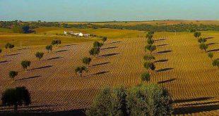 campo alentejo agricultura 02