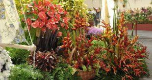 festa flor madeira