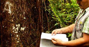 floresta certificação