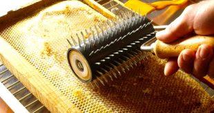 mel apicultura 06